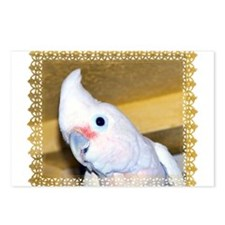 Goffin Cockatoo Postcards (Package of 8)