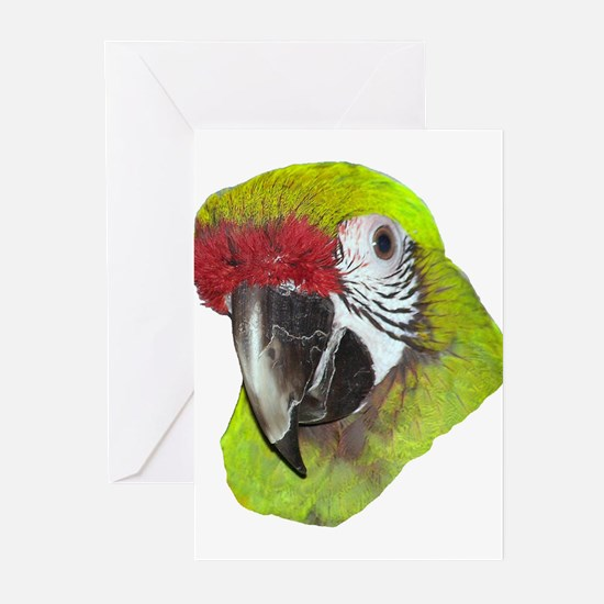 Millitary Macaw Greeting Cards (Pk of 10)