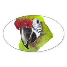 Millitary Macaw Oval Decal
