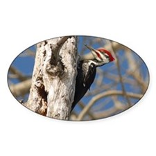 Male Pileated Woodpecker Decal