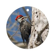 Male Pileated Woodpecker Ornament (Round)