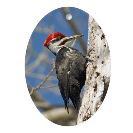 Male Pileated Woodpecker Ornament (Oval)