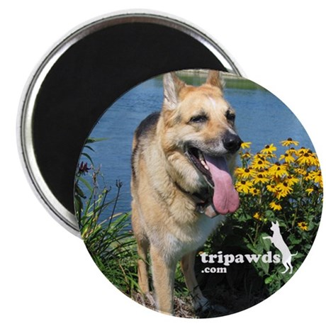 Tripawd Magnet