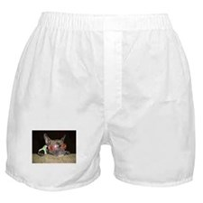 Chill'n Frenchie Boxer Shorts