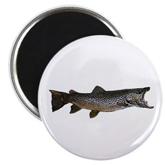 Brown trout Magnet