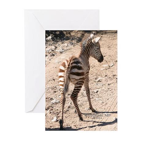 Baby Zebra Greeting Cards (Pk of 10)