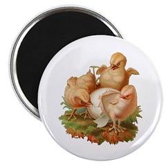 Chicken Hatching Chicks Magnet
