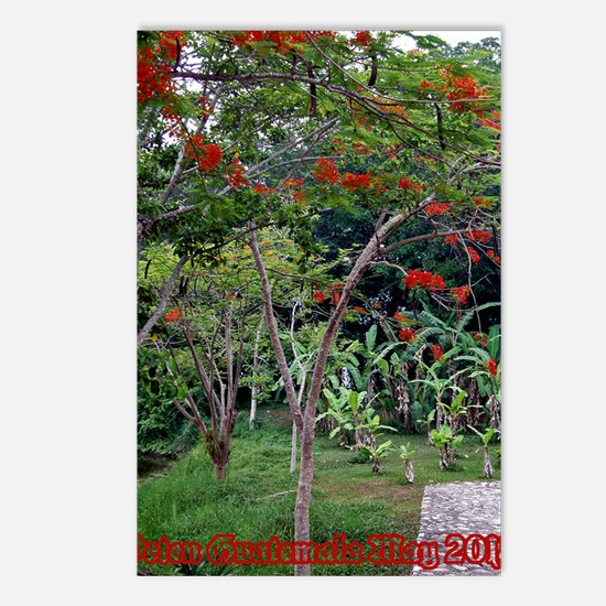Flamboyants In Guatemala Postcards (package Of 8)
