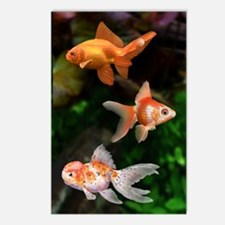 Funny Goldfish Postcards (Package of 8)