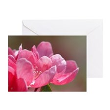 Blossom Greeting Cards (Pk of 20)