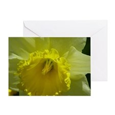 Dafodil Greeting Card