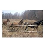 Hagan's Horses Postcards (Package of 8)
