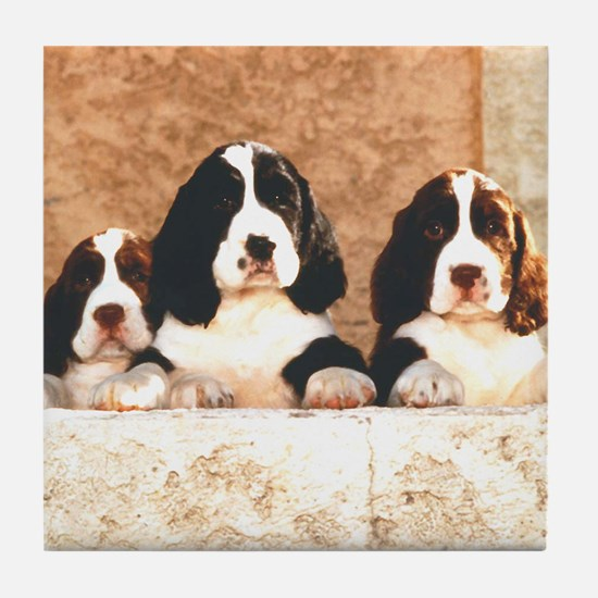 English Springer Pups 2 Tile Coaster
