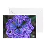 Hyacinth Top Greeting Cards (Pk of 20)