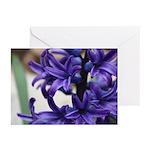 Hyacinth Side Greeting Cards (Pk of 10)