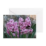 Pink Hyacinths Greeting Cards (Pk of 20)