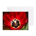 Red Tulilp Greeting Cards (Pk of 20)