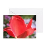 Coral Tulip Greeting Cards (Pk of 20)