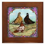 English Shortfaced Pigeons Fr Framed Tile