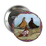 "English Shortfaced Pigeons Fr 2.25"" Button (1"