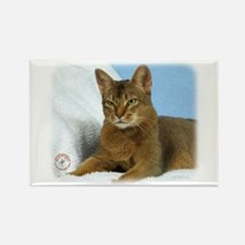 Abyssinian Cat 9Y009D-020 Rectangle Magnet