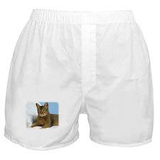 Abyssinian Cat 9Y009D-020 Boxer Shorts