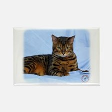 Bengal Cat 9W052D-023 Rectangle Magnet