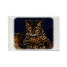 Bengal Cat 9W080D-128 Rectangle Magnet