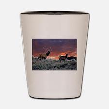 Elk at sunset Shot Glass
