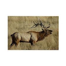 Bull Elk Bugling Rectangle Magnet (10 pack)