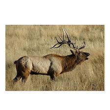 Bull Elk Bugling Postcards (Package of 8)