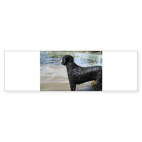 Portuguese Water Dog Sticker (Bumper)