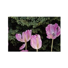 May Tulips Rectangle Magnet