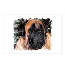 Mastiff 36 Postcards (Package of 8)