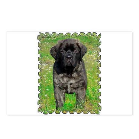 Mastiff 129 Postcards (Package of 8)