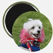 Patriotic poodle Magnet