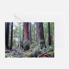 World's Tallest Trees Greeting Cards (Pk of 10