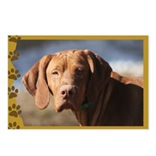 Vizsla Head Study Postcards (Package of 8)