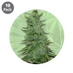"Green Bob 3.5"" Button (10 pack)"