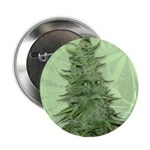 "Green Bob 2.25"" Button (10 pack)"