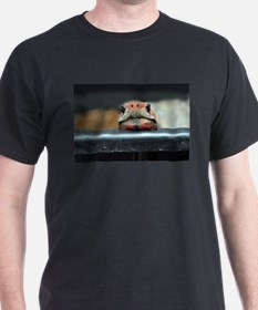 Curious Red Foot Tortoise T-Shirt