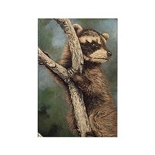 Raccoon Rectangle Magnet (10 pack)