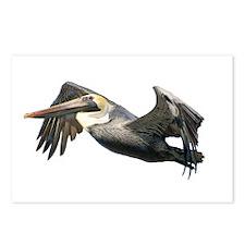 Pelican Flying Postcards (Package of 8)