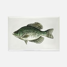 Black Crappie Fish Rectangle Magnet