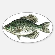 Black Crappie Fish Oval Decal