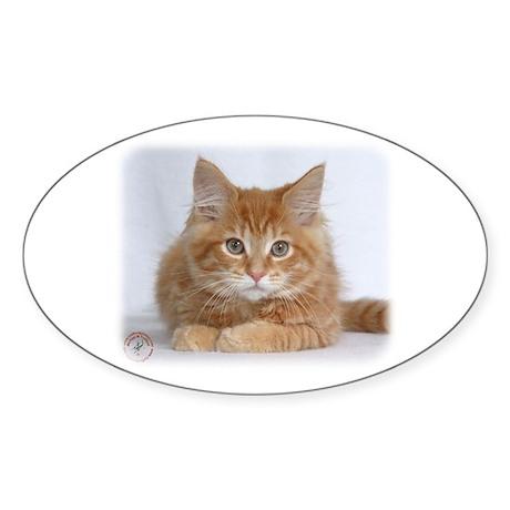 Maine Coon Kitten 9Y226D-373a Sticker (Oval)