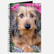 Doxie 1 Journal