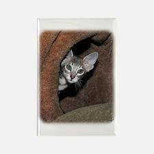 Oriental Kitten 9Y796D-013 Rectangle Magnet