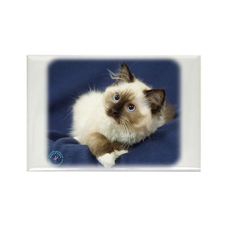 Ragdoll Cat 9W082D-011 Rectangle Magnet (10 pack)