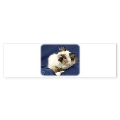 Ragdoll Cat 9W082D-011 Sticker (Bumper)
